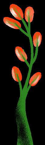plantota